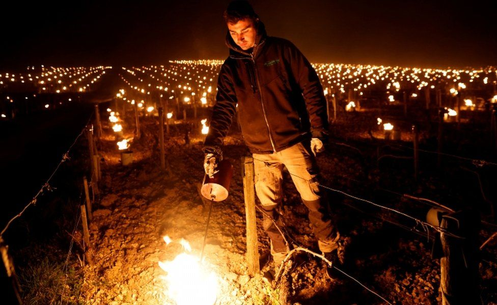 A French winemaker lights candles to protect the vines overnight as temperatures dropped.