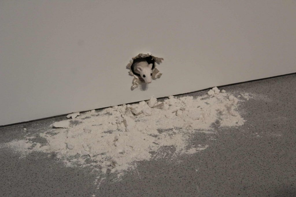A photo of a white, animatronic mouse, poking his head out of a hole in the wall with dust and pieces of the wall below him.